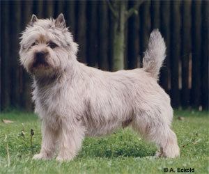 Cairn-gross